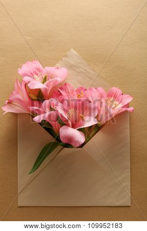 Pink Alstroemeria in envelope on beige background