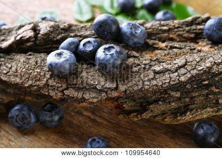 Fresh blueberries with tree on wooden table, closeup