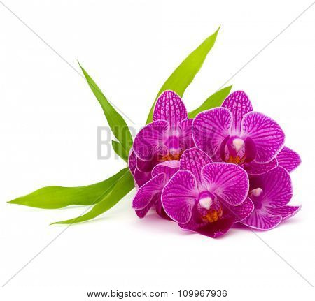 Orchid flower head bouquet  isolated on white background cutout