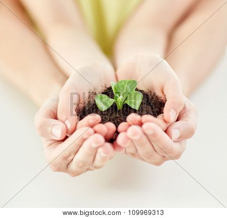 people, charity, family and ecology concept - close up of child and parent cupped hands holding soil with green sprout at home