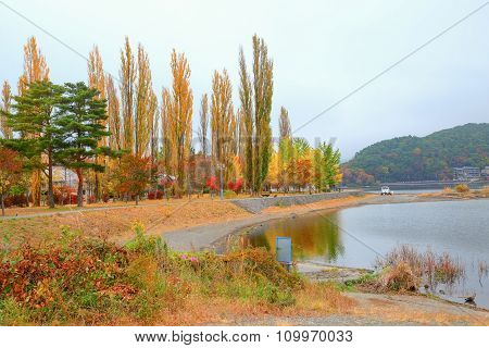 Ginkgo tree park and lake