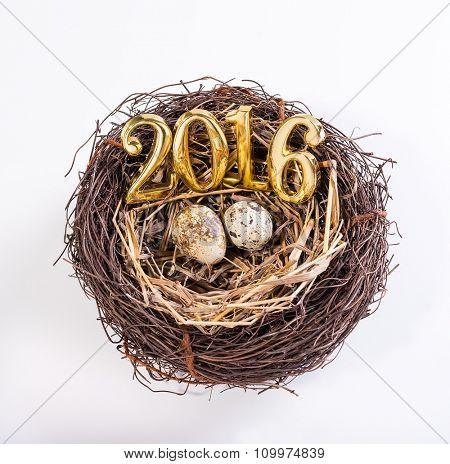 New born 2016 on nest