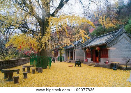 Temple during autumn of China in Qingtao