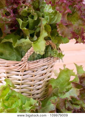 Lollo Rosso Salad