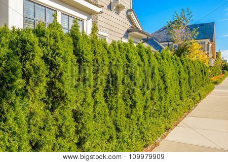 Fence with trimmed bush and concrete path.