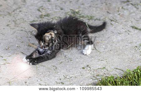 Kitten Catches Ray Of Light
