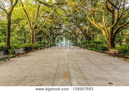 Walkway To Fountain Under Oaks
