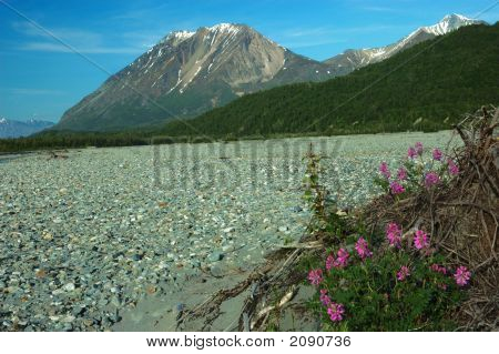 King Mountain And Flowers