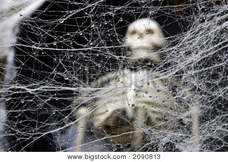 Web With Skeleton