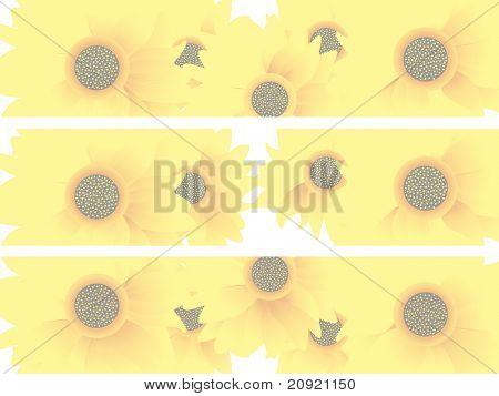 encabezado de girasoles, vector illustration