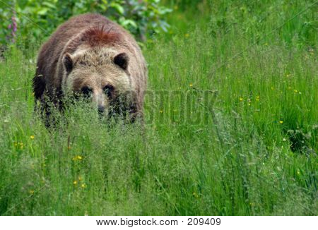 Grizzly Approaches