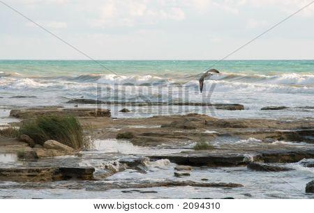 Sea-Gull Flight
