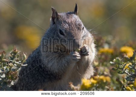 Squirrel Foraging
