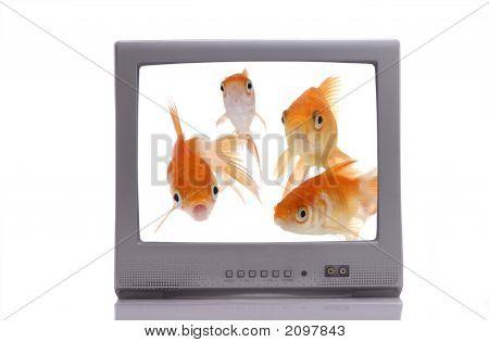 Fish-O-Vision