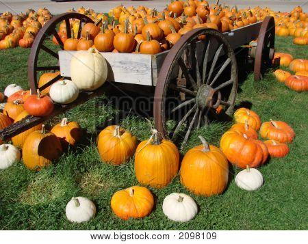 Pumpkins On The Wagon