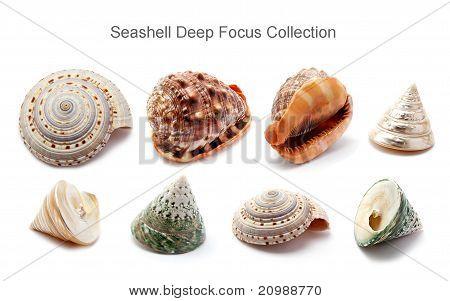 Seashell Deep Focus Collection