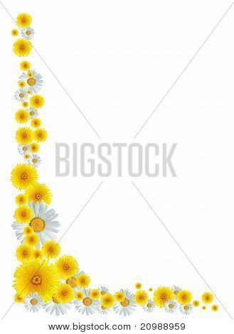 Border flores