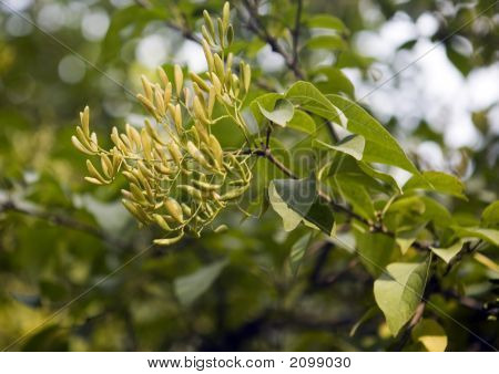 Collection Of Autumn Leaves In Tree Nurseries 8