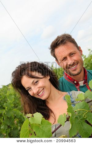Happy couple of winegrowers in vineyard