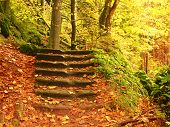 Stony Steps In Forest, Tourist Footpath. Bellow Golden Trunks Curved Sandstone  Steps poster