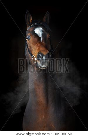 Bay horse in dark, clouds of steam