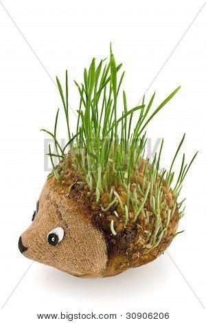 Erizo con la germinación de pasto de trigo en lugar de las espinas