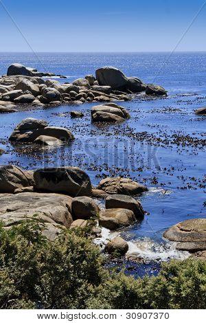 Kelp and boulders