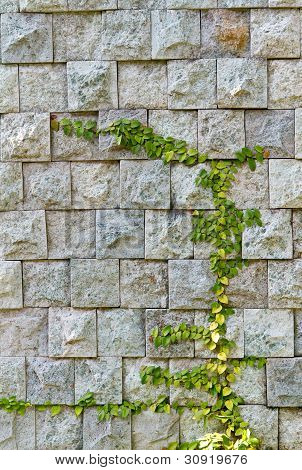 weed on stone wall