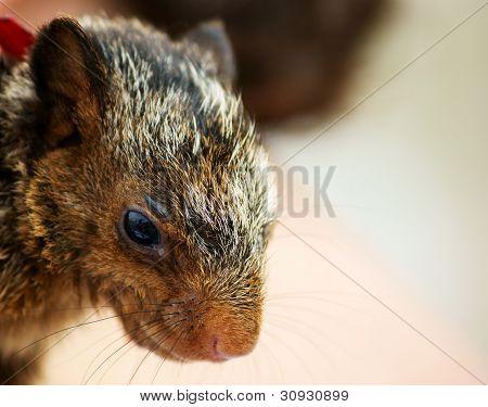 Closeup of Squirrel