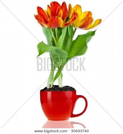 flor do buquê de tulipa em um copo vermelho com copyspace isolado no fundo branco