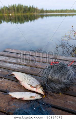 Whitefishes And Lake
