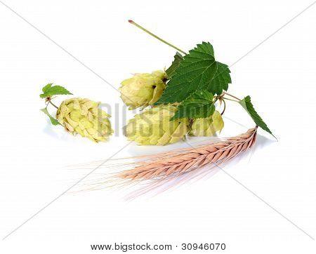 Hop Ingredient For Beer