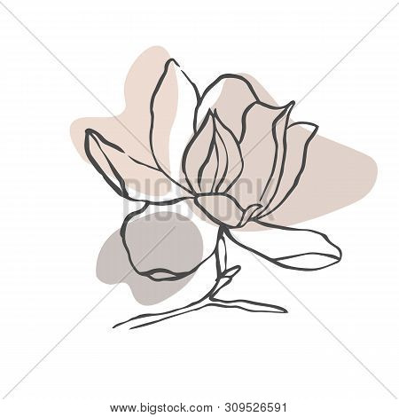poster of Modern Abstract Shapes Vector Background Or Layout. Contour Line Drawing Flower Of Magnolia.  Modern