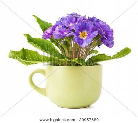 Flower In Cup