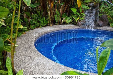 Swimming Pool In Jungle