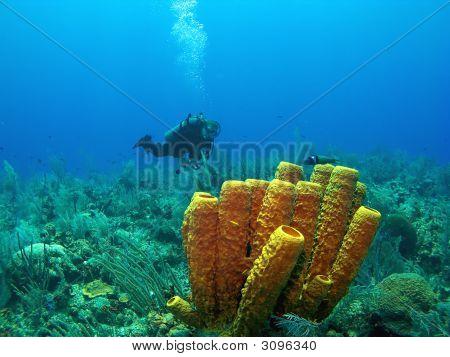 Scuba Diver And Yellow Tube Sponge