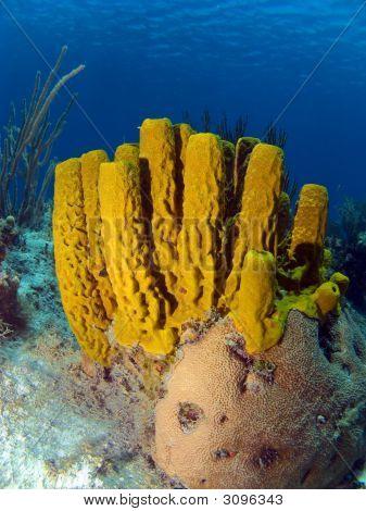 Colorful Yellow Tube Sponge