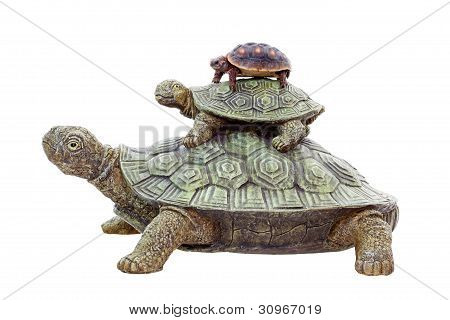 Red Footed Tortoise On Top