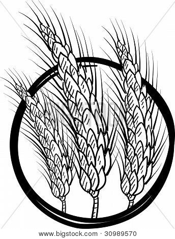 Wheat or grain sketch