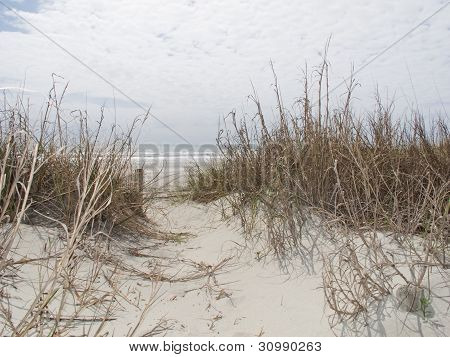 Sand & Sea Oats