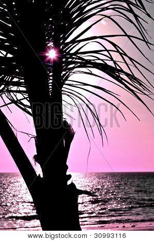 Palm tree luxury