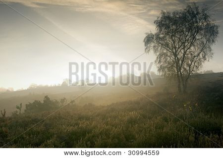 Foggy Misty Autumn Forest Landscape At Dawn