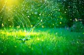 Garden, Grass Watering. Smart garden activated with full automatic sprinkler irrigation system worki poster