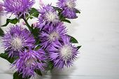 Purple Daisy Flower. Flower In Garden At Sunny Summer Or Spring Day. Flower For Postcard Beauty Deco poster