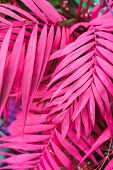 Decoration Of Tropical Leaves Painted In Bright Neon Colors. Stylish Psychedelic Hallucinogenic Deco poster