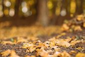 Autumn Forest. Closeup Of Yellow Leaves Fallen On Ground Over Blurred Nature Park Background. poster