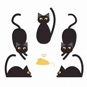 Black Cats And Fake Mouse. White Background poster