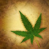 stock photo of rasta  - cannabis leaf in grunge style old times - JPG