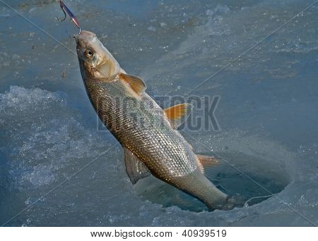 Fish On Hook