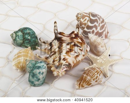 Shells In The Net